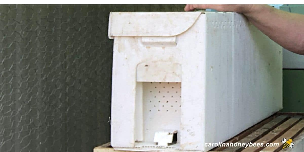 Nuc colonies are available to purchase in 5 frame nuc boxes image.