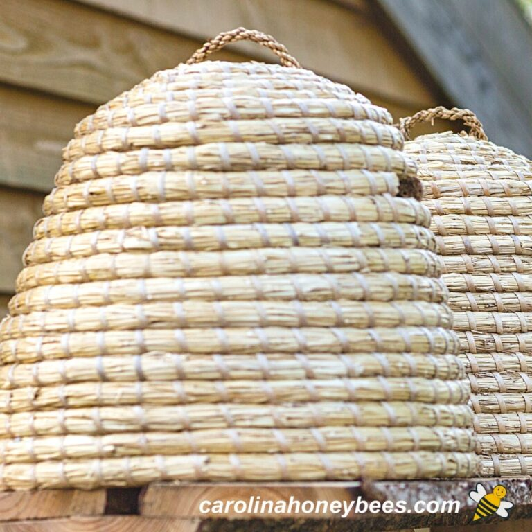 Bee Skep Hives- a Traditional Approach