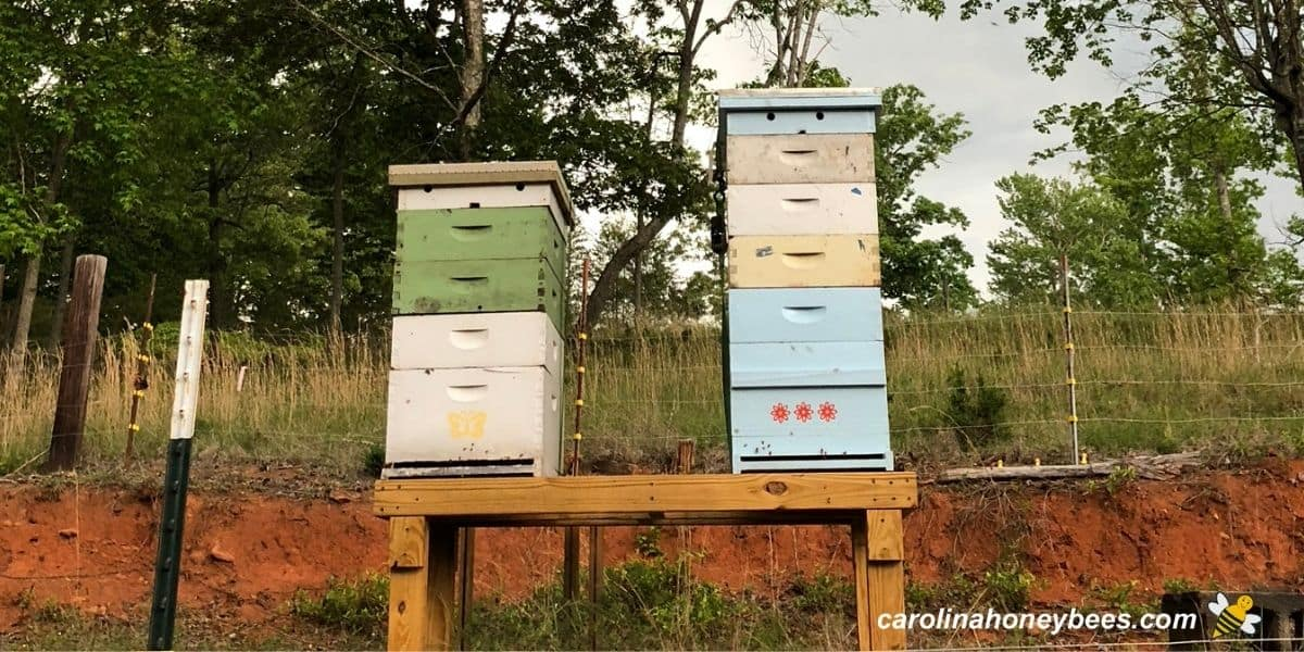 Stacked boxes of langstroth hives on wooden stands image.