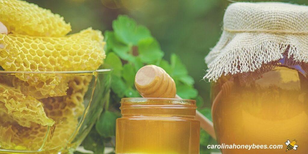 Various best honey favorites in jar image.