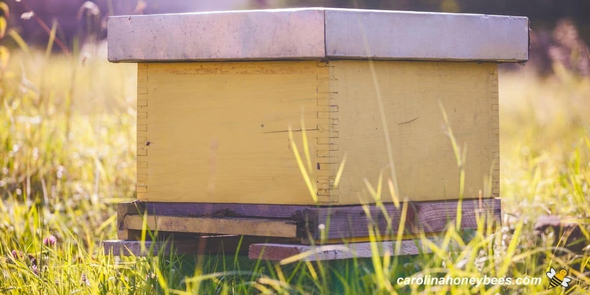 Yellow beehive placed in the yard among grasses image.