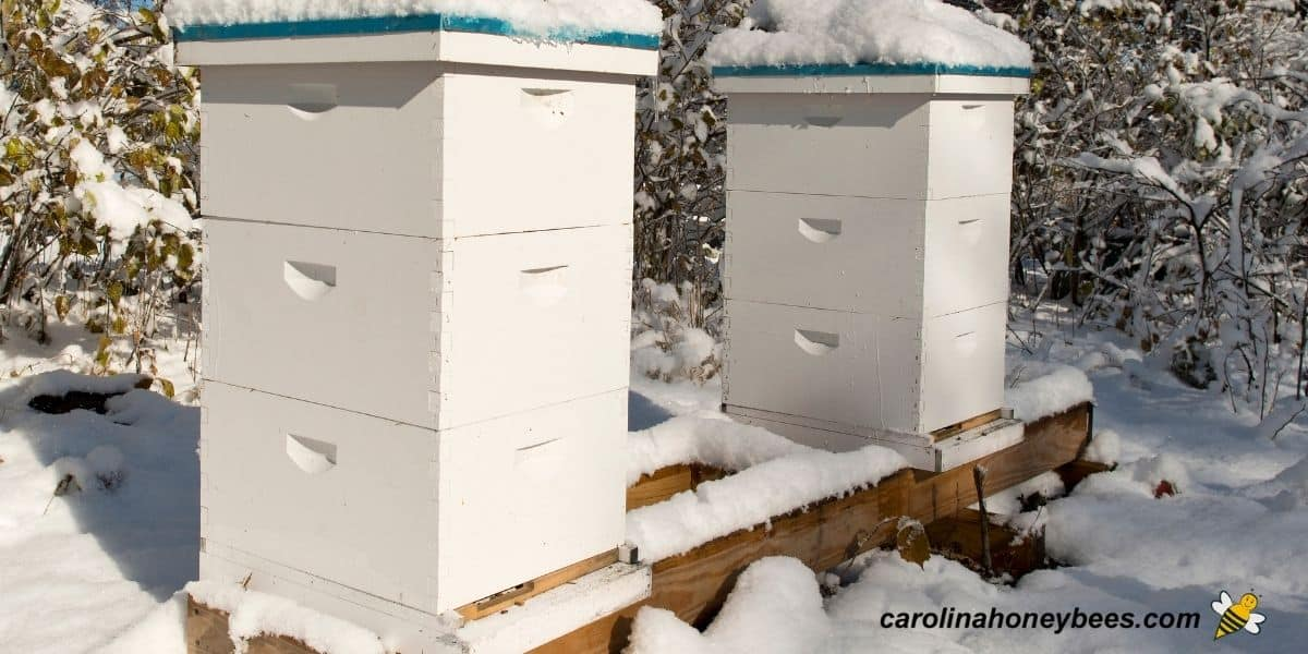 Two winter beehives in the snow beekeeper feeding before cold image.