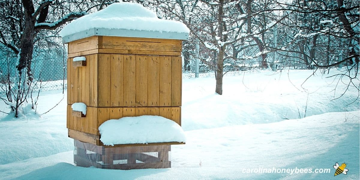 Bee hive in winter snow where bees go to survive image.