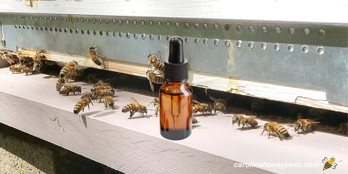 Honey bees at front of hive with essential oil bottle image.