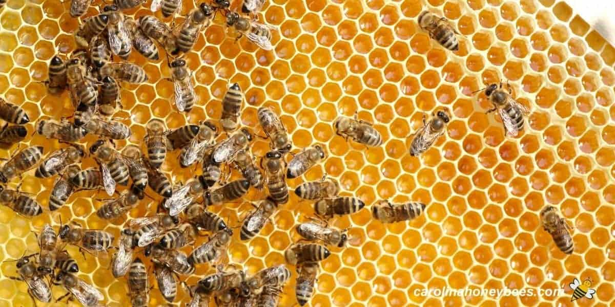 Worker honey bees making honey inside the hive image.