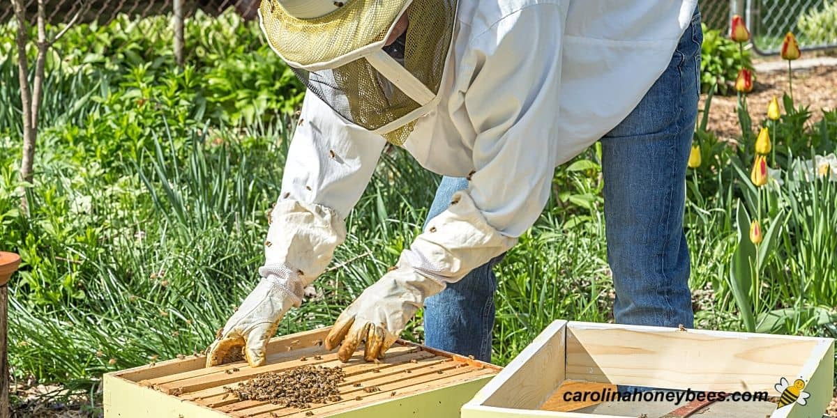 Bee farmer setting up a new beekeeping business hive image.