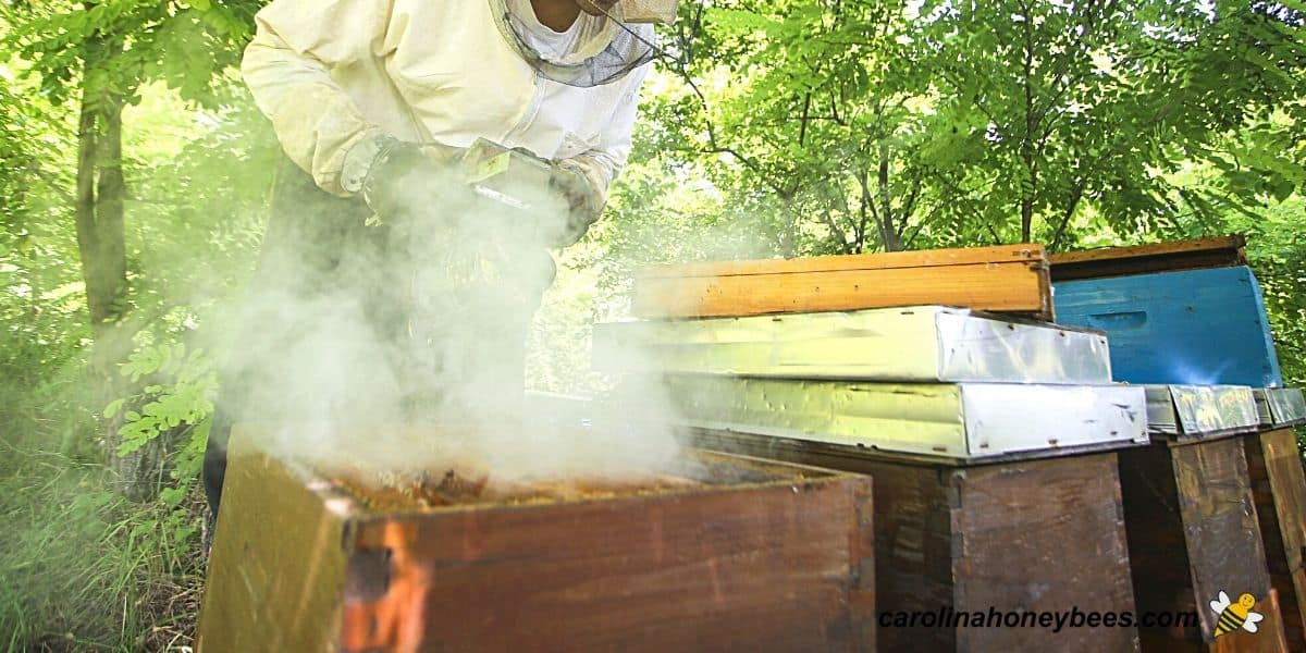 Beginning beekeeper using too much smoke causes problems during hive inspection image.