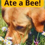 Yellow dog ate a bee sniffing flowers image.