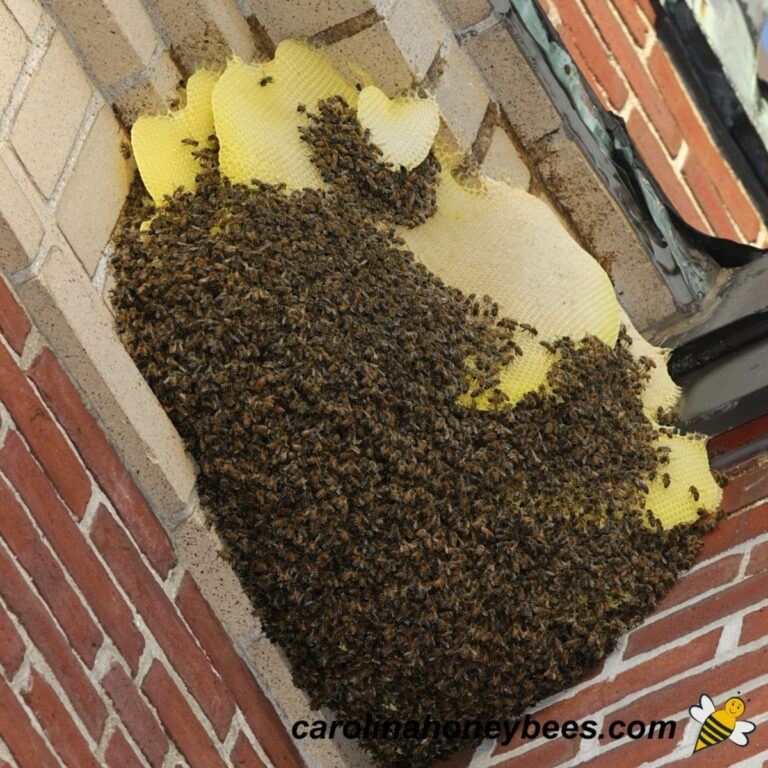 How to Remove Bees from Your Space