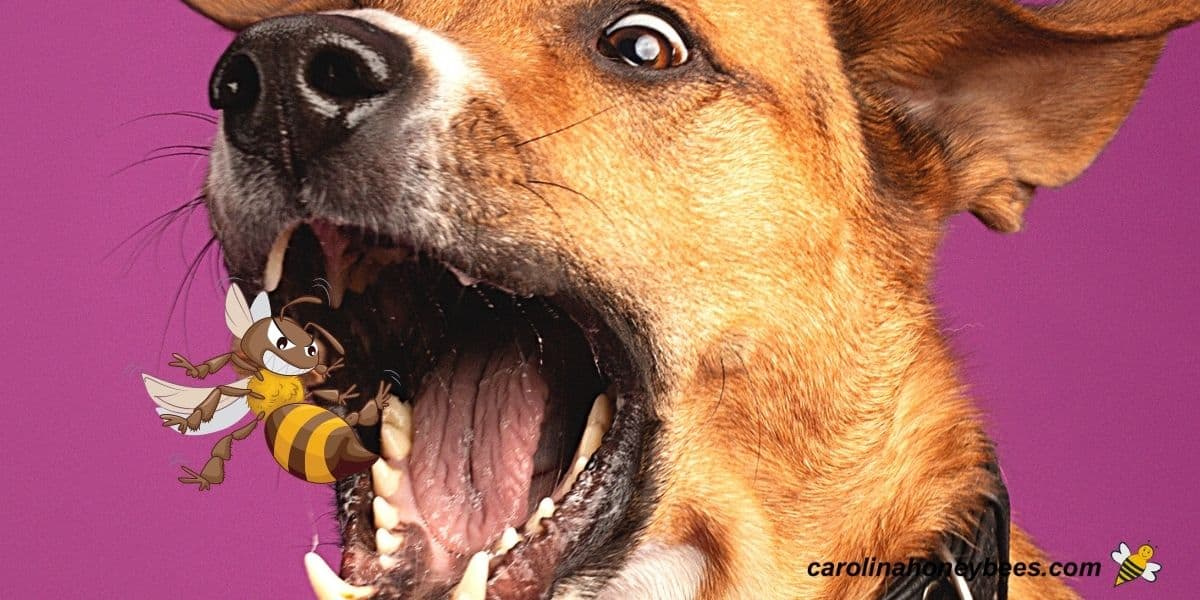 Funny dog eating a bee image.